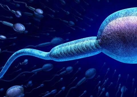 espermatozoide invitro